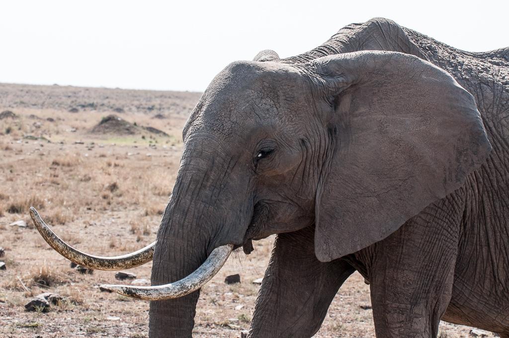 Afrika-141.jpg