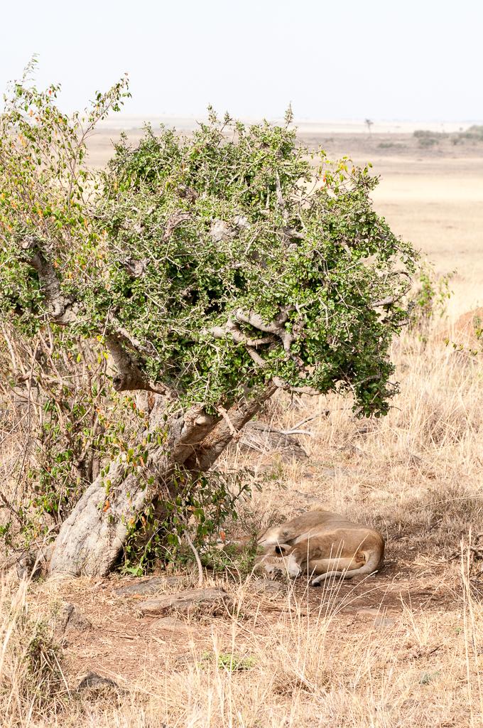 Afrika-174.jpg