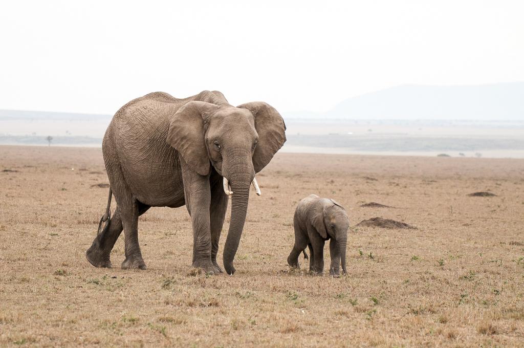 Afrika-185.jpg