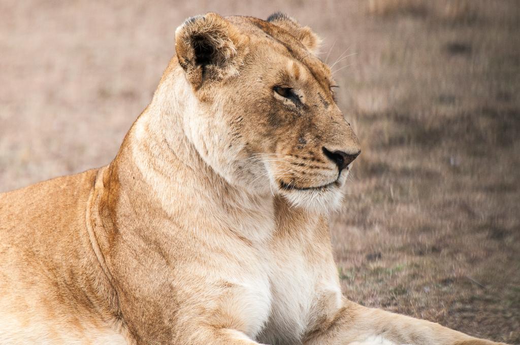 Afrika-192.jpg