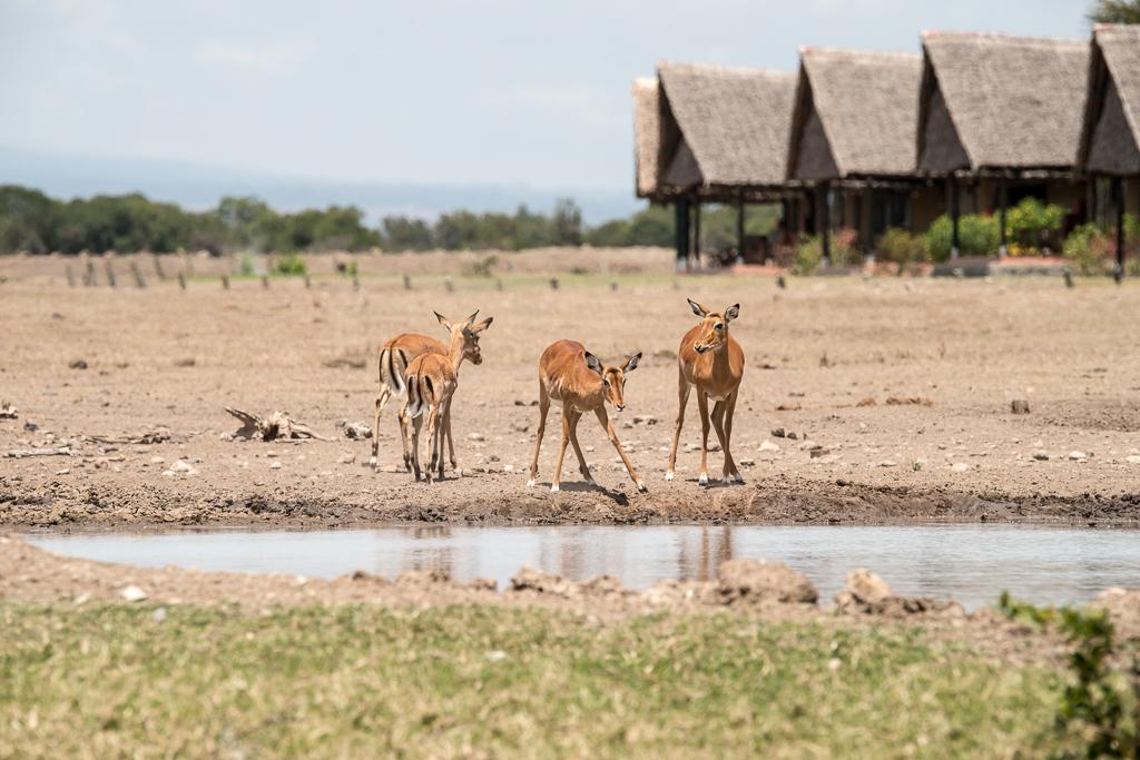 Afrika-8.jpg