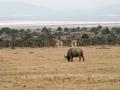Afrika-50.jpg